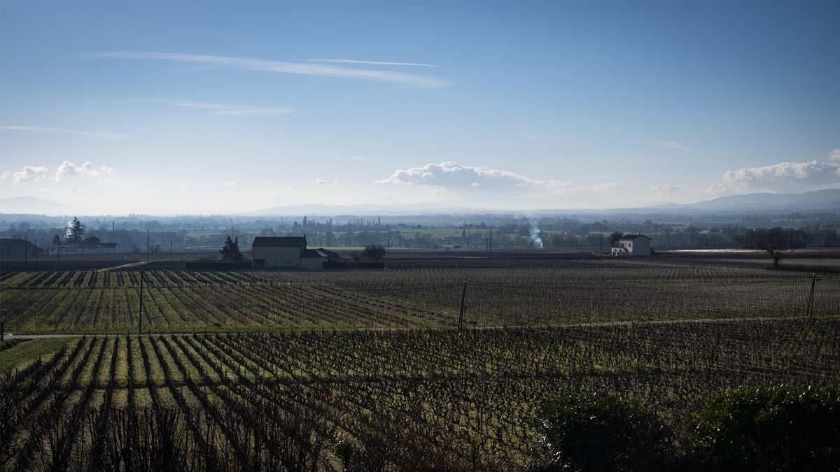 conseil-marketing-packaging-vin-beaujolais
